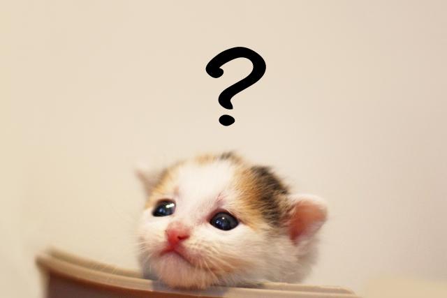 疑問に思うネコ